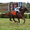 Archidust wins the 2019 Mahony Stakes at Saratoga<br /> Coglianese Photos/Susie Raisher