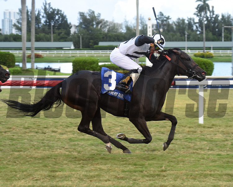 Raki wins the 2019 Miss Gracie Stakes at Gulfstream Park. Photo: Coglianese Photos/Lauren King