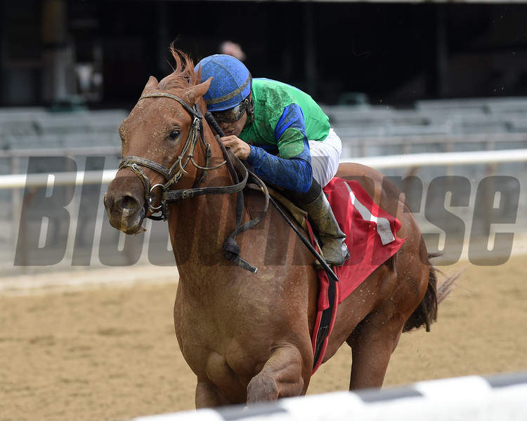 Sky of Hook - Maiden Win, Belmont Park, May 10, 2019<br /> First winner for Tapiture<br /> Coglianese Photos/Chelsea Durand