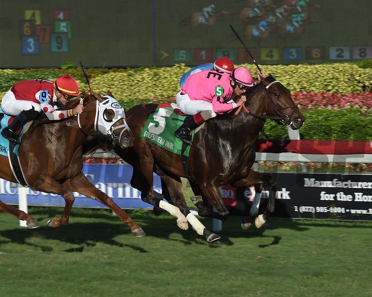 Casa Creed wins the 2019 Kitten's Joy Stakes at Gulfstream Park<br /> Coglianese Photos/Lauren King