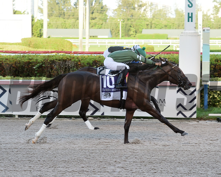 Liam's Lucky Charm wins the 2019 FTBOA Florida Sire Affirmed Stakes at Gulfstream Park. Photo: Coglianese Photos/Lauren King