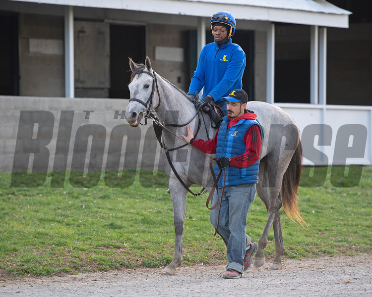 Hip 145 Wicked Spirit from Kirkwood Stables. Wicked Spirit<br /> Morning sales and racing scenes at Keeneland in Lexington, Ky., on April 4, 2019