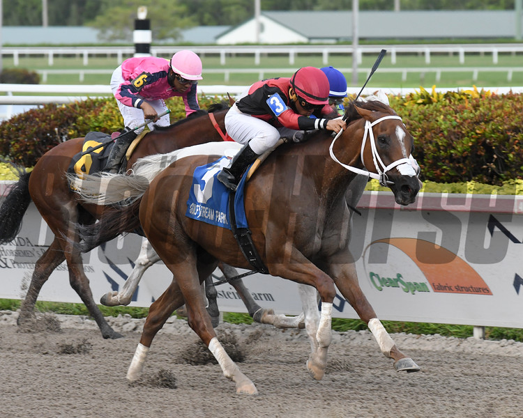Hy Riverside wins the 2019 Big Red Stakes at Gulfstream Park<br /> Coglianese Photos/Ryan Thompson