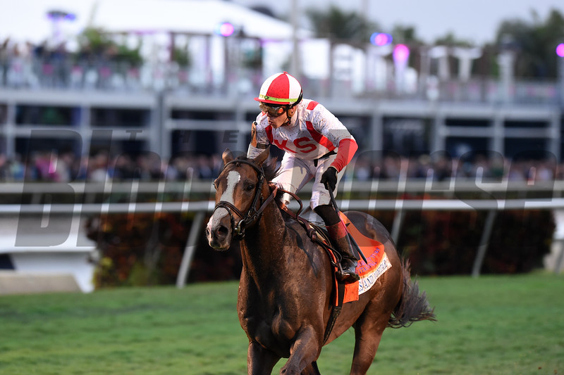 Bricks and Mortar wins the Pegasus World Cup Turf at Gulfstream Park Saturday, January 26, 2019. Photo: Coglianese Photos/Adam Mooshian