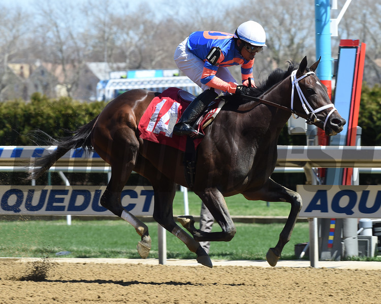 Mo Mystery breaks her maiden on debut at Aqueduct Wednesday, April 17, 2019. Photo: Coglianese Photos