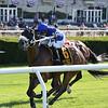 Rinaldi wins the New York Stallion Stakes Sunday, June 23, 2019 at Belmont Park. Photo: Coglianese Photos/Joe Labozzetta