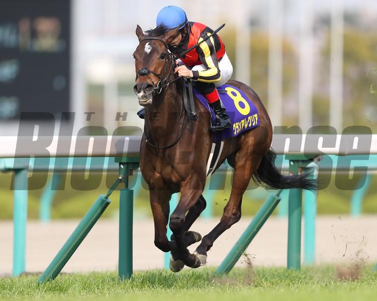 Gran Alegria wins 2019 Oko Sho. Photo: Masakazu Takahashi
