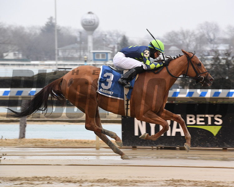 Divine Miss Grey wins 2019 Heavenly Prize Stakes at Aqueduct. Photo: Coglianese Photos/Susie Raisher