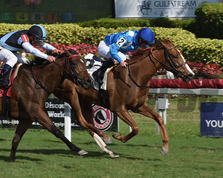 Boxwood wins the 2019 Ginger Brew at Gulfstream Park.<br /> Coglianese Photos/Lauren King