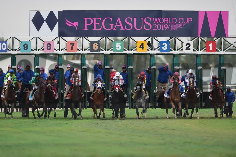 The 2019 Pegasus World Cup Turf Start<br /> (won by Bricks and Mortar)<br /> Coglianese Photos/Tim Sullivan