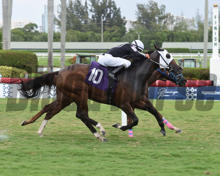 Catharsis - R Happy Ending deadheat for win in Race 7 at Gulfstream Park (AOC), July 13, 2019<br /> Coglianese Photos/Lauren King