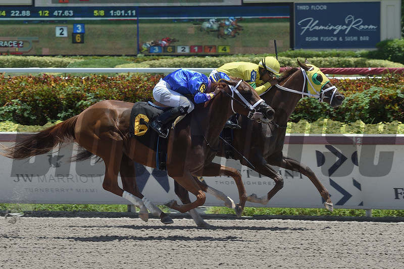 Worlds of Devine wins a maiden claiming race Saturday, July 27, 2019 at Gulfstream Park. Photo: Coglianese Photos/Lauren King
