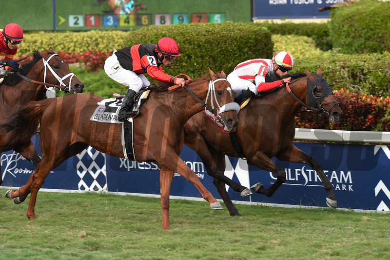 Focus Group wins 2019 Pan American Stakes at Gulfstream Park. Photo: Coglianese Photos/Leslie Martin