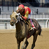 Not About the Nail wins the 2019 Belle Gallantey Stakes at Aqueduct<br /> Coglianese Photos/Elsa Lorieul