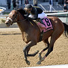 Bon Raison wins the 2019 Peeping Tom Stakes at Aqueduct<br /> Coglianese Photos/Joe Labozzzetta