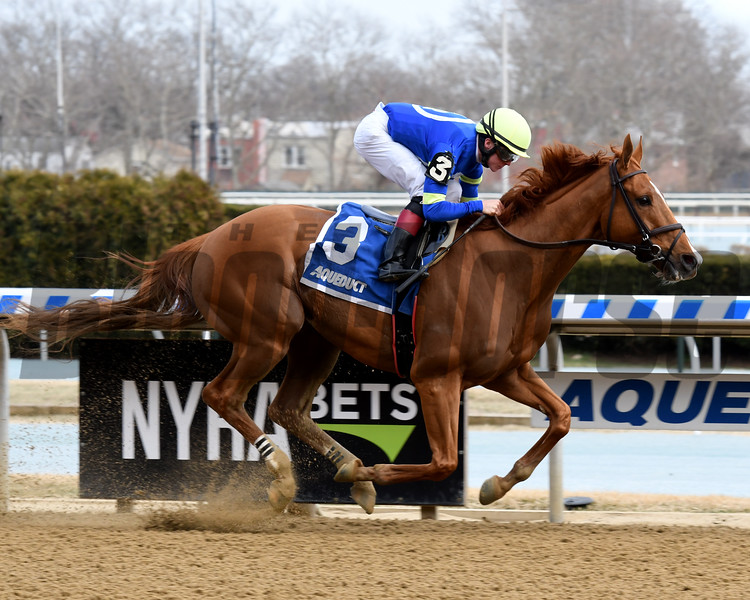 Its All Relevant wins the 2019 Dads Caps Stakes at Aqueduct<br /> Coglianese Photos/Susie Raisher