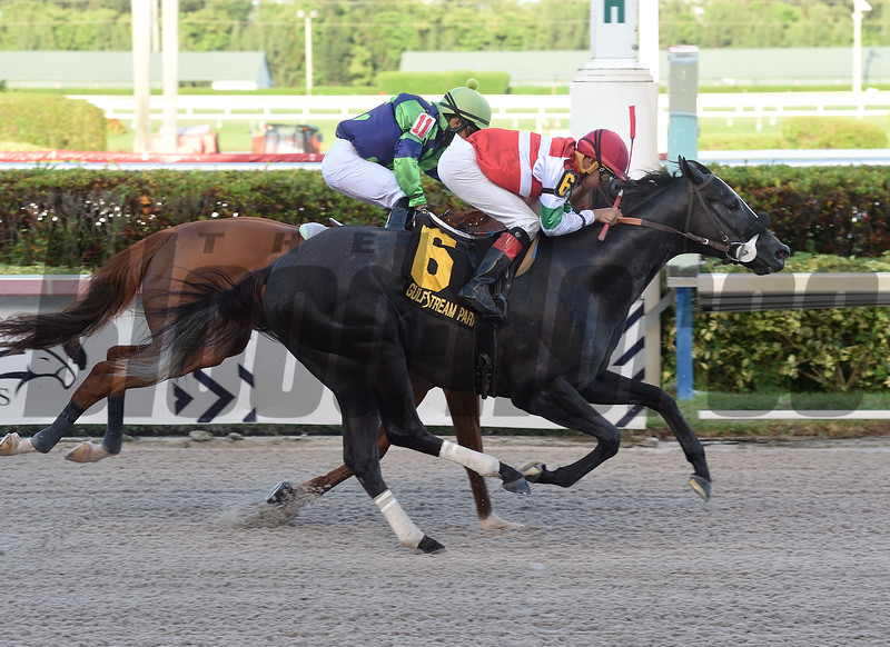 Art G Is Back wins the 2019 Benny The Bull Stakes<br /> Coglianese Photos/Lauren King