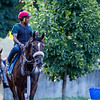 Preservationist goes out for his morning exercise at the Oklahoma Training Center adjacent to the Saratoga Race Course Friday July 12, 2019 in Saratoga Springs, N.Y.  Photo by Skip Dickstein
