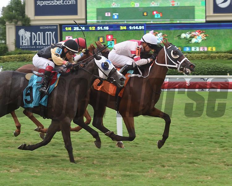 Fortlite wins 2019 Maiden Claiming race at Gulfstream Park. Photo: Coglianese Photos/Lauren King