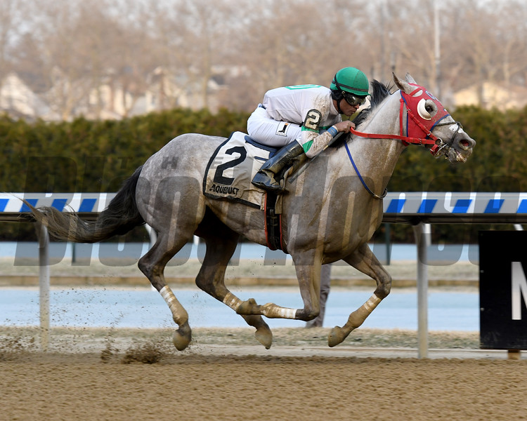 Mr. Brix wins the 2019 Caixa Eletronica Stakes at Aqueduct<br /> Coglianese Photos/Susie Raisher