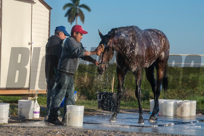 Signalman getting a bath @ Gulfstream Park March 23 2019<br /> ©Joe DiOrio/Winningimages.biz