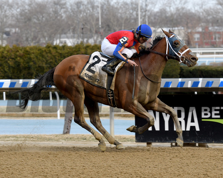 H Man wins the 2019 Kelly Kip Stakes at Aqueduct<br /> Coglianese Photos/Susie Raisher