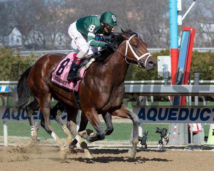 Life's a Parlay wins the Excelsior Stakes at Aqueduct Saturday, April 6, 2019. Photo: Skip Dickstein