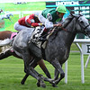 Significant Form wins the 2019 Intercontinental Stakes at Belmont Park<br /> Coglianese Photos