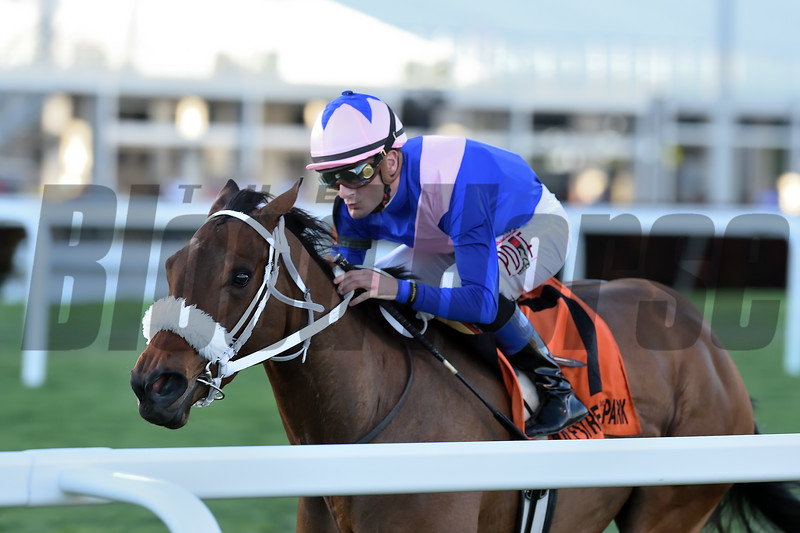 A Bit Special wins the Sweetest Chant Stakes at Gulfstream Park Sunday, February 3, 2019. Photo: Coglianese Photos/Kenny Martin