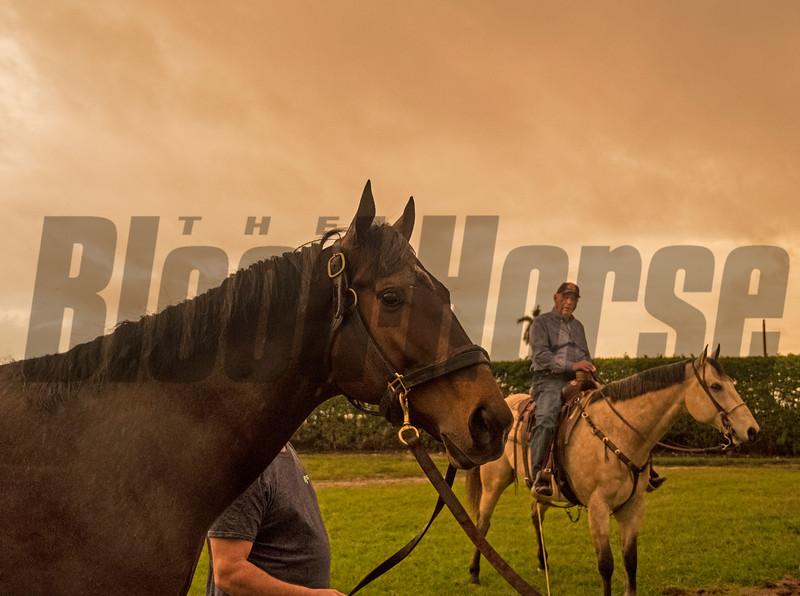 Bravazo - Morning - Gulfstream Park - 012019<br /> Joe DiOrio Photo