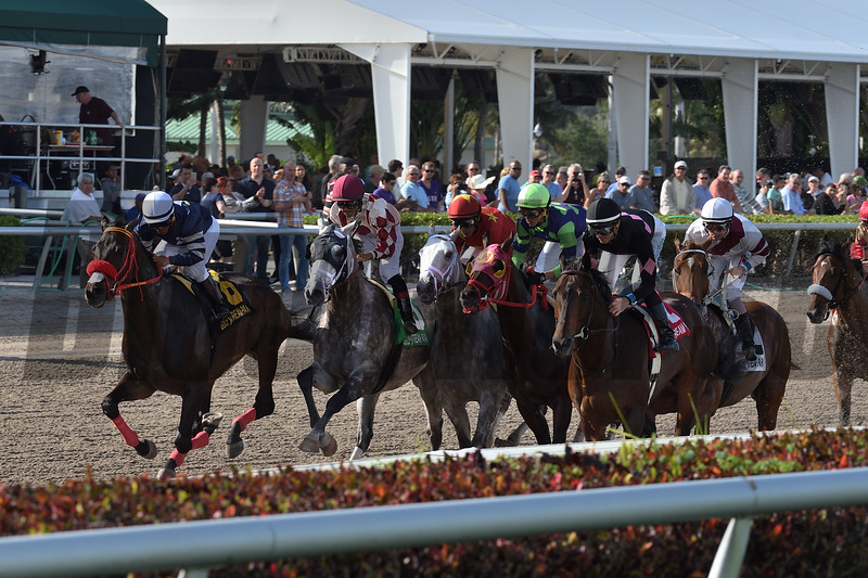 Marconi wins the 2019 Skip Away Stakes at Gulfstream Park. <br /> Coglianese Photos/Lauren King