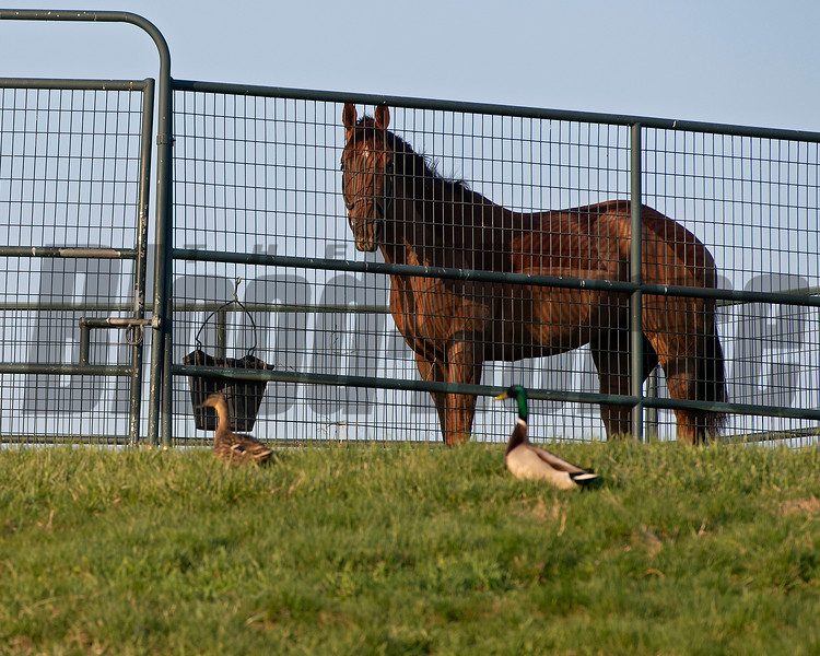 Morning scenes at Keeneland in Lexington, Ky., on April 3, 2019. scene, checking out the fowl.