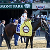 Mitole wins the 2019 Runhappy Metropolitan Handicap at Belmont Park<br /> Coglianese Photos/Joe Labozzetta