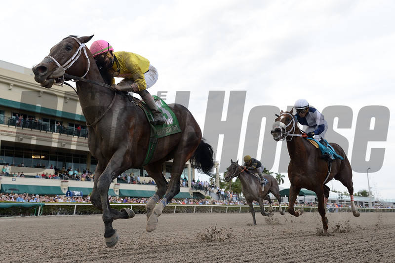 Call Paul wins the 2019 Swale Stakes at Gulfstream Park<br /> Coglianese Photos