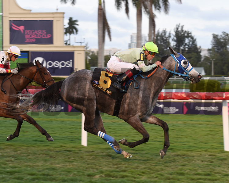 Yako wins the 2019 Andromeda Stakes at Gulfstream Park<br /> Coglianese Photos/Leslie Martin