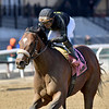 Bon Raison wins the 2019 Peeping Tom Stakes at Aqueduct<br /> Coglianese Photos/Elsa Lorieul