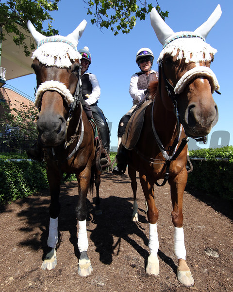 Delaware Park paddock scene on July 13, 2019. Photo By: Chad B. Harmon