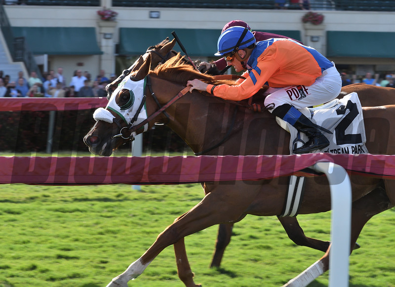 Dr. Edgar wins the 2019 Appleton Stakes at Gulfstream Park<br /> Coglianese Photos/Lauren King