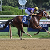 American Butterfly - Maiden Win, Saratoga, August 17, 2019<br /> Coglianese Photos