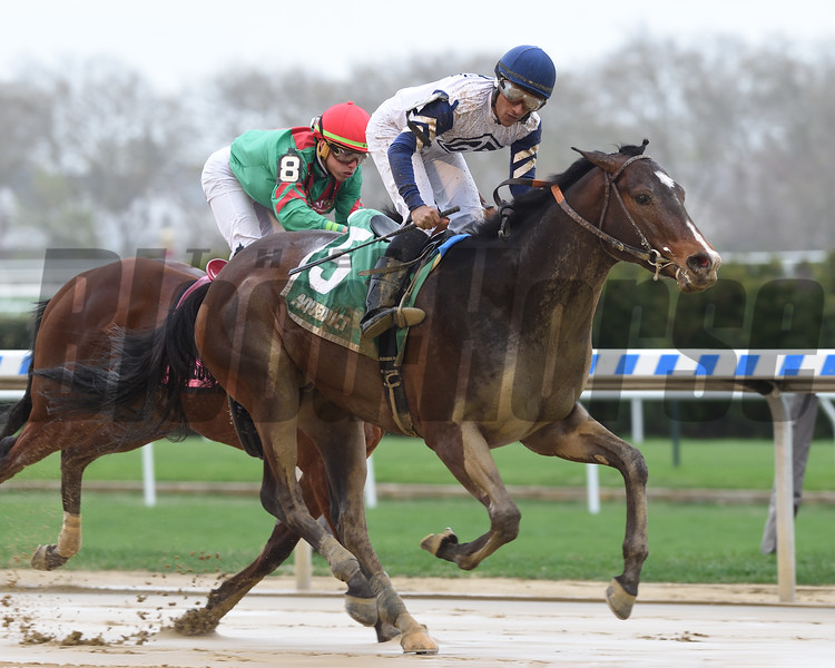 Funny Guy wins the New York Stallion Stakes Saturday, April 20, 2019 at Aqueduct. Photo: Coglianese Photos