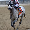 Marconi wins the 2019 Flat Out Stakes at Belmont Park<br /> Coglianese Photos/Elsa Lorieul