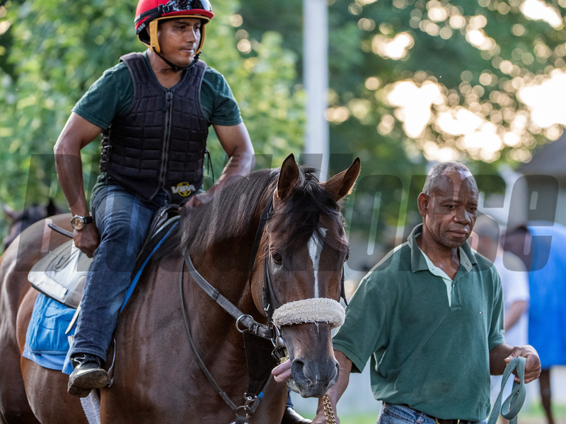 Preservationist with regular exercise rider heads to the track for an early morning gallop at the Oklahoma Training Center adjacent to the Saratoga Race Course Friday July 12, 2019 in Saratoga Springs, N.Y.  Photo by Skip Dickstein