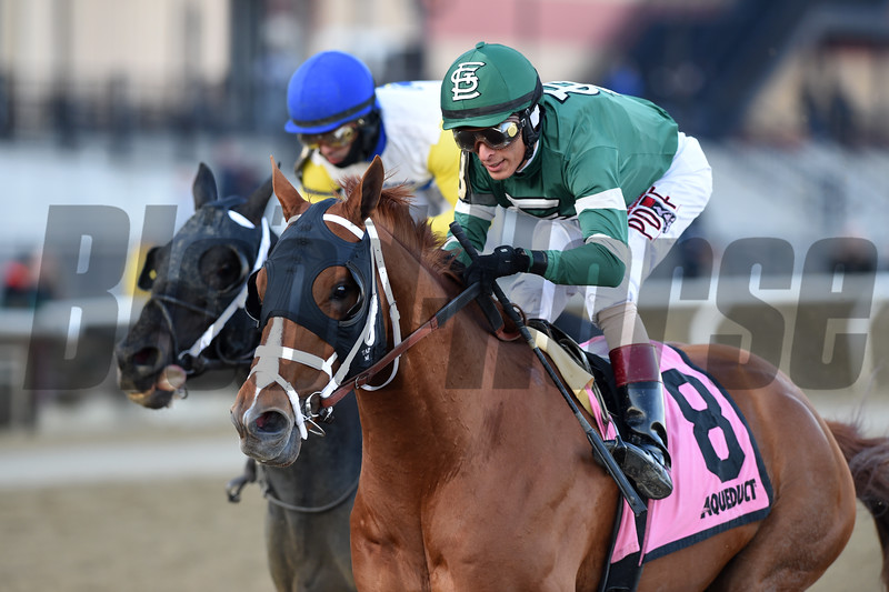 Vino Rosso wins the 2019 Stymie at Aqueduct<br /> Coglianese Photos/Chelsea Durand