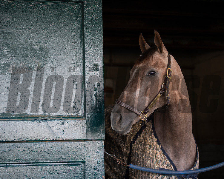 At The Races - 2019 - BloodHorse Photo Store