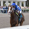 Prince Lucky wins the 2019 Hal's Hope Stakes at Gulfstream Park<br /> Coglianese Photos/Derbe Glass