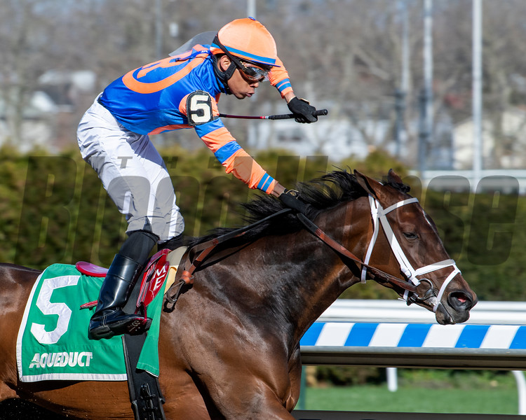 Always Shopping wins the Gazelle Stakes at Aqueduct Saturday, April 6, 2019. Photo: Skip Dickstein
