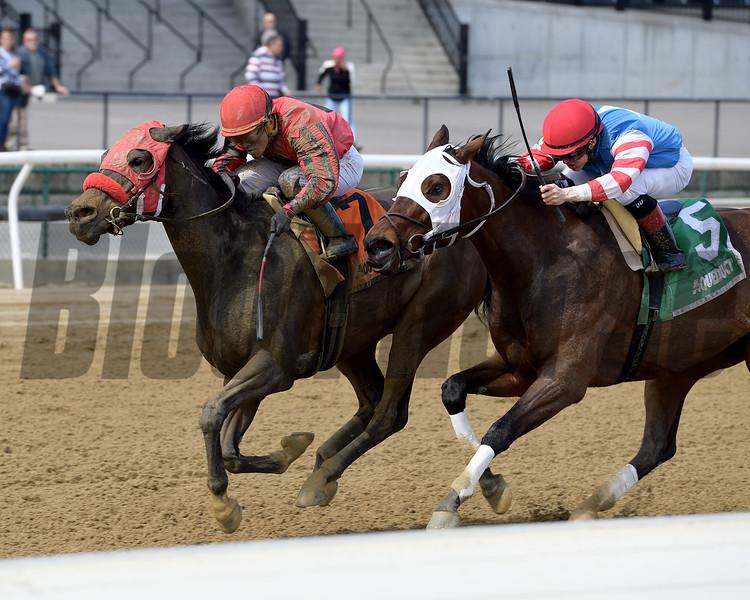 Archumybaby wins the 2019 Videogenic Stakes at Aqueduct<br /> Coglianese Photos/Joe Labozzetta