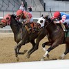 Archumybaby wins the 2019 Videogenic Stakes at Aqueduct<br /> Coglianese Photos/Joe Labozzetta