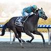 Do Share wins the 2019 Tom Fool at Aqueduct<br /> Coglianese Photos