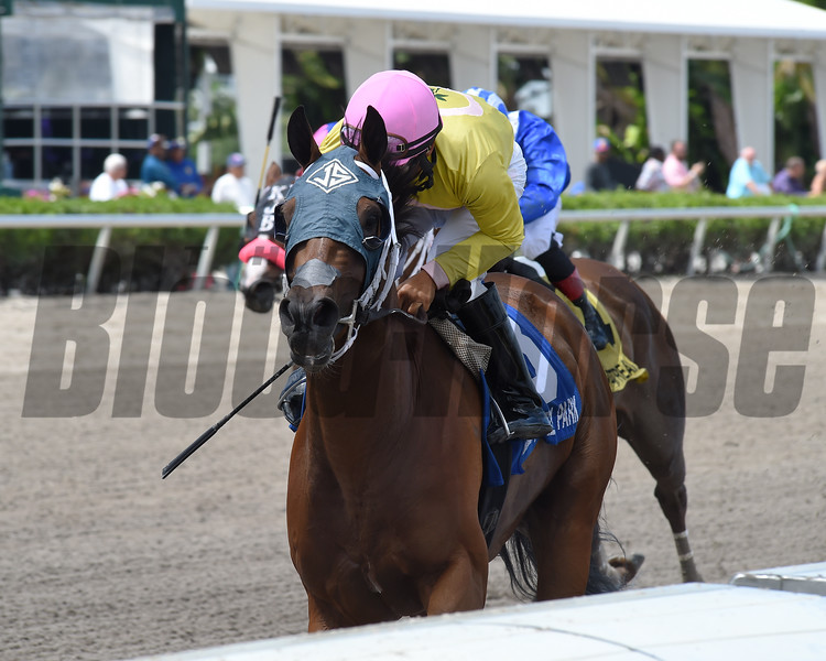 A Bit of Both wins the 2019 Game Face Stakes at Gulfstream Park<br /> Coglianese Photos/Cris Morales